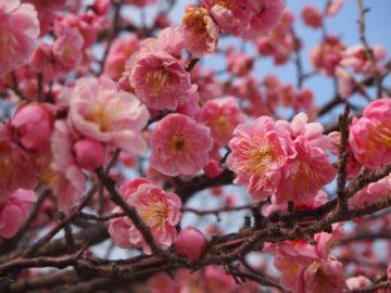 春が近づいてきましたの画像