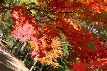 紅葉の季節ですねの画像
