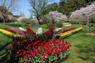 浜松フラワーパークの画像